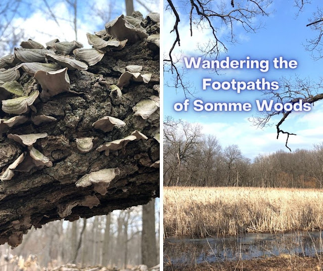 Celebrating the Change of Seasons Wandering Somme Woods in Northbrook, Illinois