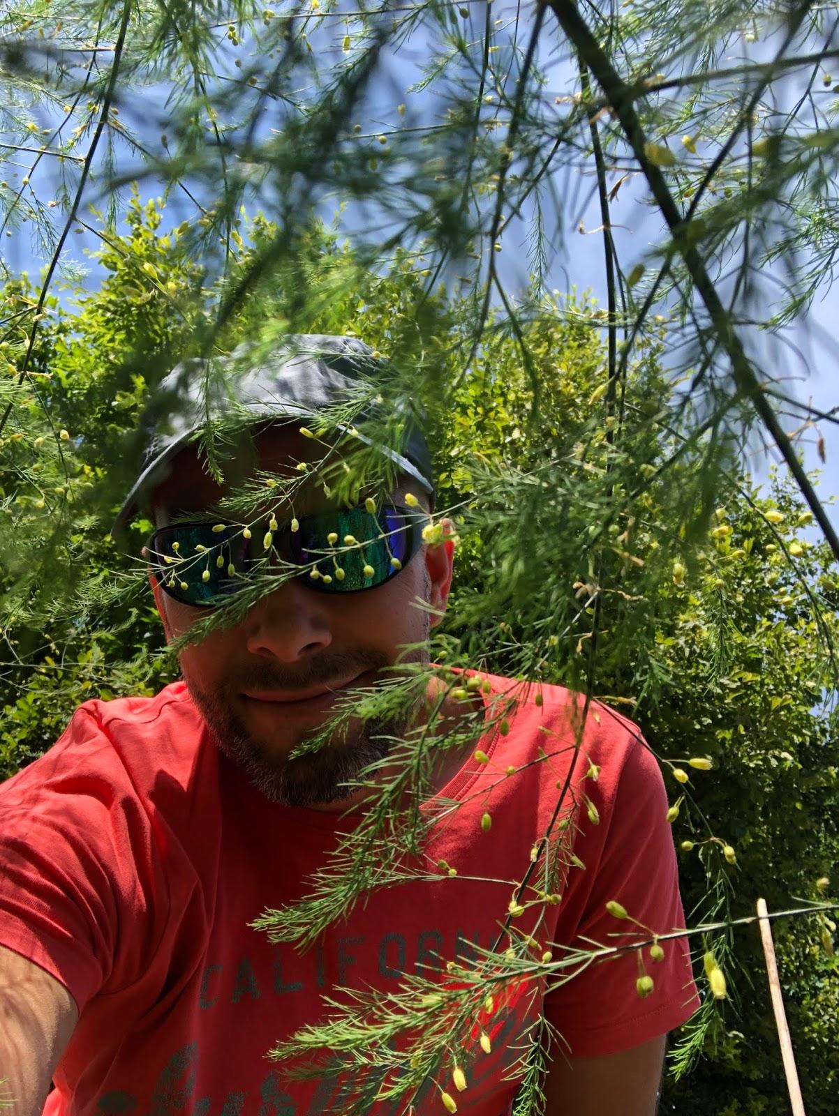 droogte 2020 moestuin volkstuin asperges loof