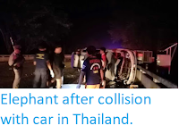 https://sciencythoughts.blogspot.com/2019/09/villager-attacked-by-elephant-after.html