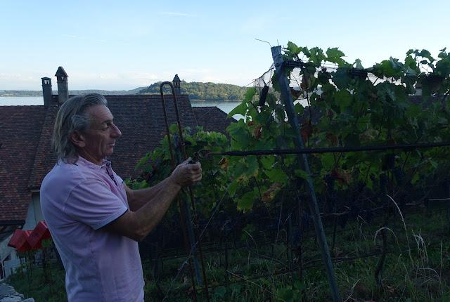 Einblick in die Weinernte mit Bio-Weinpionier Bruno Martin