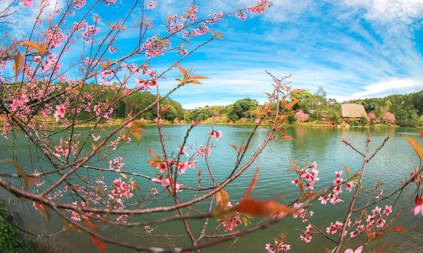 Hồ Đăk Ke- Măng Đen mùa hoa mai anh đào