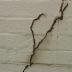 Cari Anti Rayap Karena Tembok Rumah Banyak Rayap? Simak Di Sini!