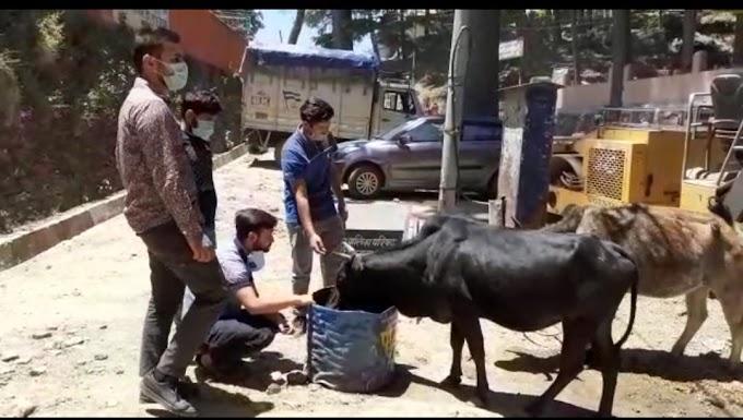 लॉक डाउन में बेजुबान पशुओं की भूख  प्यास मिटाने का जिम्मा लिया पौड़ी के नौजवानों ने-देखें पूरी खबर