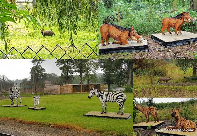 Knowsley Safari #Ultimatebricksafari wolf zebra warthog hyena prairie dog