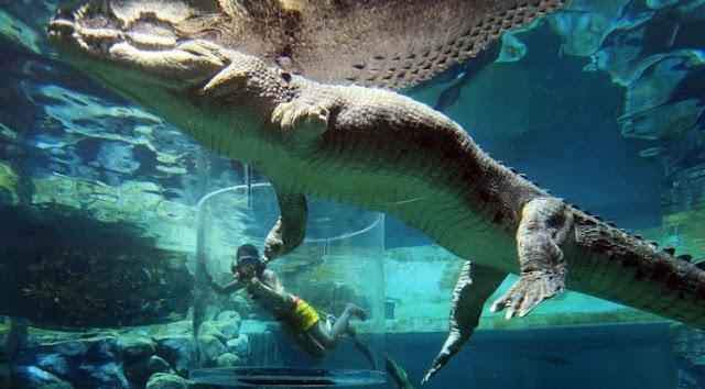 Crocosaurus Cove, Objek Wisata Menantang Buaya