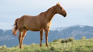 تفسير مشاهدة الحصان في حلم الرجل