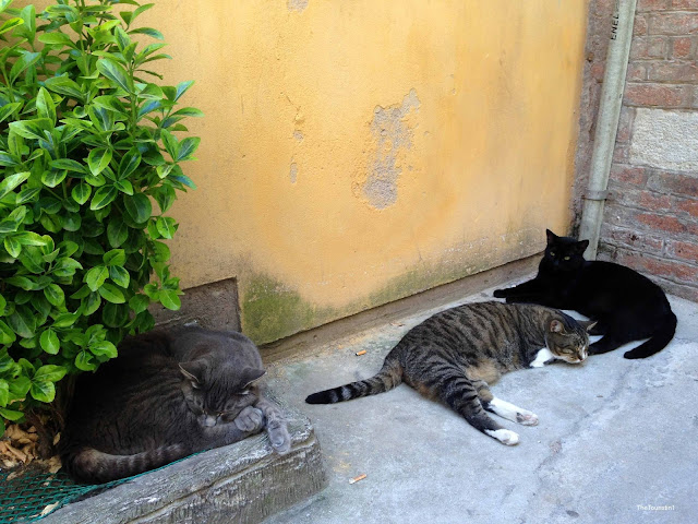 Black cat, grey cat, tabby cat napping and relaxing in a courtyard.