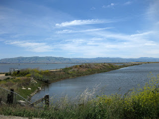 Salt ponds along San Francisco Bay, with a view of the Diablo Range to the east, Sunnyvale, California