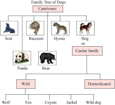 Chapter-2-How-Dog-Found-Himself-Master-Ncert-Questions-Answers-Class-6