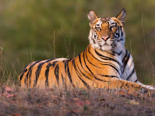All Tiger Reserves in India in Hindi ।भारत के सभी बाघ अभयारण्य