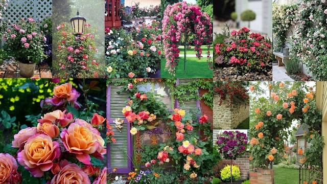 Κήποι με Τριανταφυλλιές