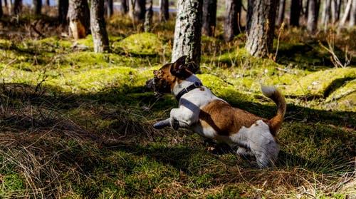 Puppy Training - Tips Reducing Bad Habits