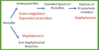Penicillins_Antimicrobial_Spectrum