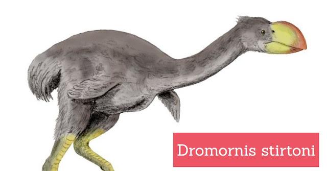 Strange Facts About Extinct Bird