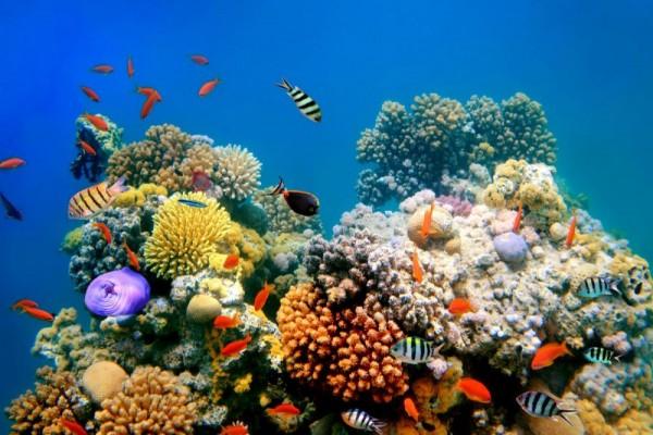 Terumbu karang karimun jawa
