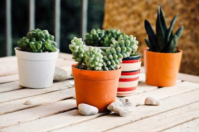 piante-grasse-per.interni