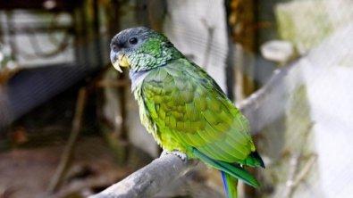 Papagaio repete palavras de vítima de feminicídio
