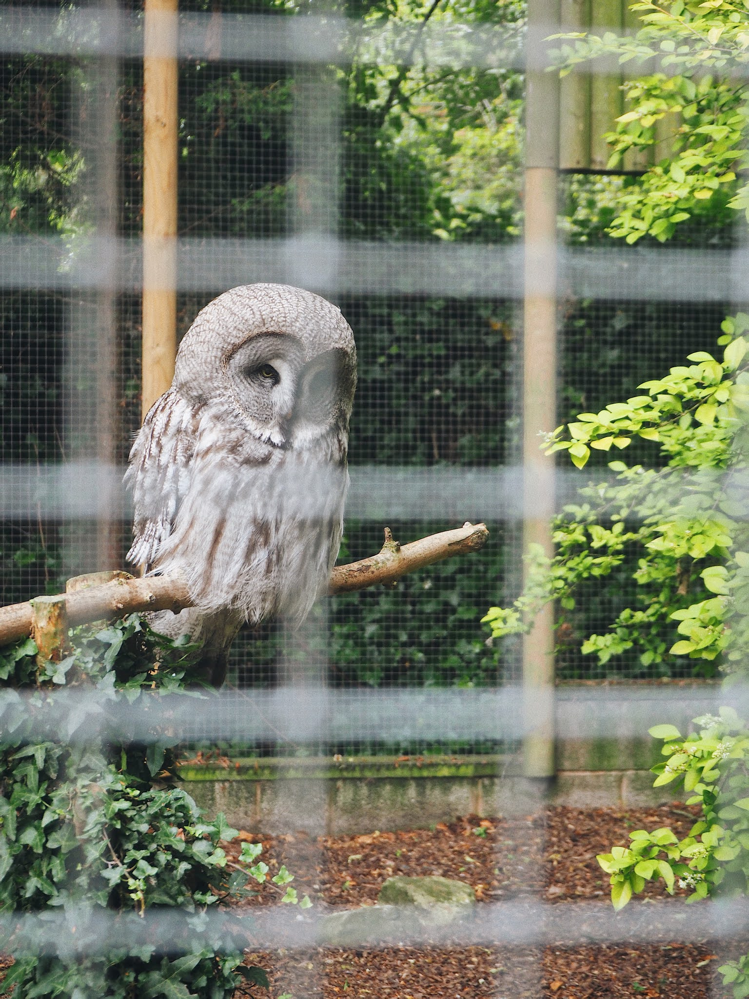 Visiting The Zoo: Post Lockdown