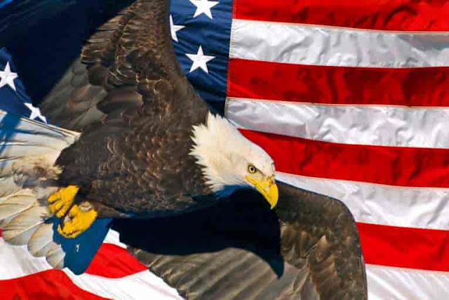 American-Eagle-Day-in-the-United-States