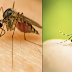 Dengue: Symptoms, Causes, Prevention and Treatment With These 6 Natural Remedies