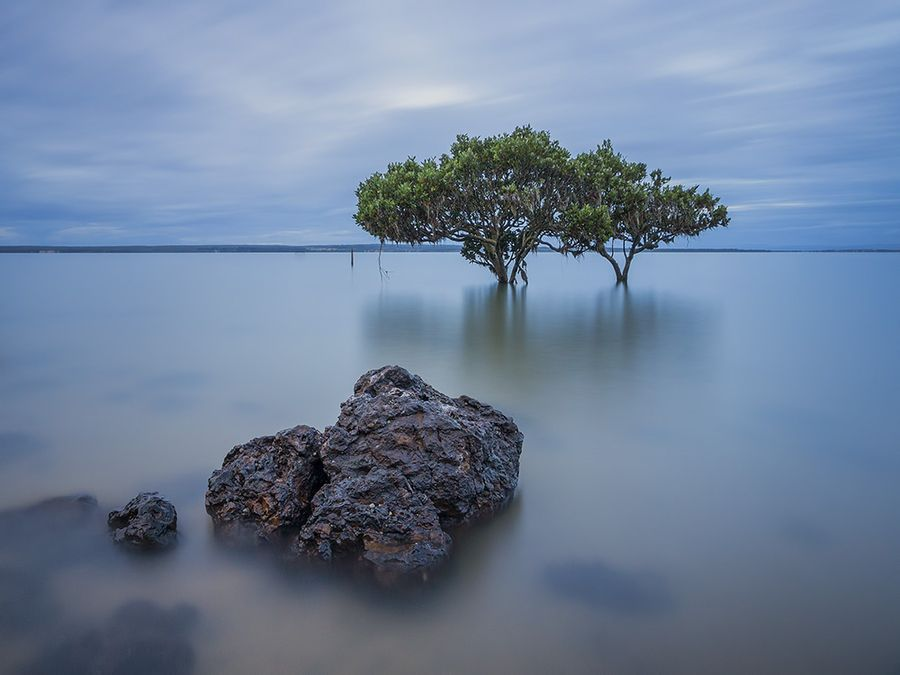 8. Mangroves by Dave Cox