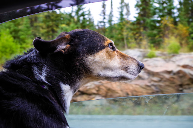 Holly the dog looks out of the window on a car ride. The Writer's Pet: Trina Moyles and Lookout