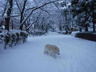 雪の積もった公園を散歩する愛犬