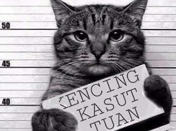 Wordless Wednesday #105 - #catlover