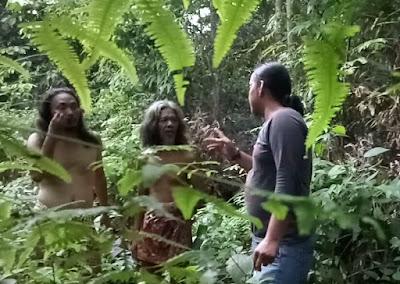 PT WKS Berulah, Kebun Sawit Milik SAD di Sungai Ibul Digusur
