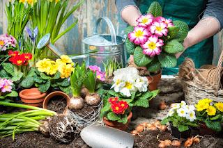 Materi 'Flowers' (Bunga) beserta Contoh Kalimat dan Soal Latihannya