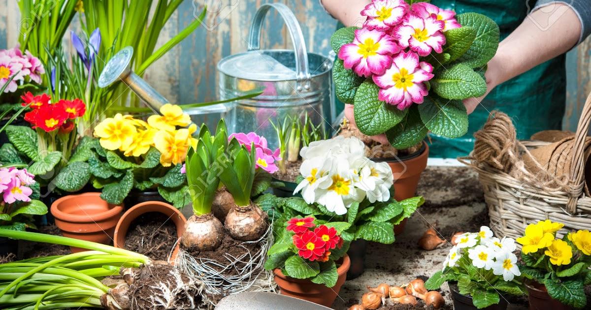 Materi Flowers Bunga Beserta Contoh Kalimat Dan Soal Latihannya Jagoan Bahasa Inggris