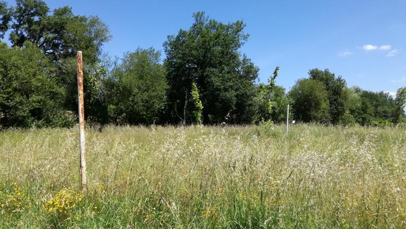 Campo de Velei com bastante erva