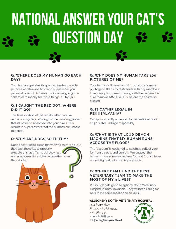 National Answer Your Cat's Questions Day Wishes Unique Image