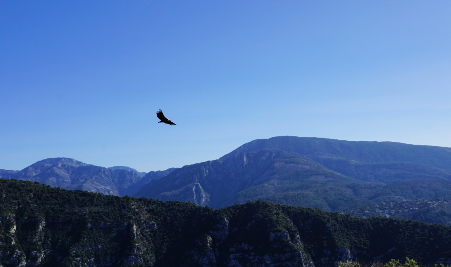 Mont Ferion and a vulture