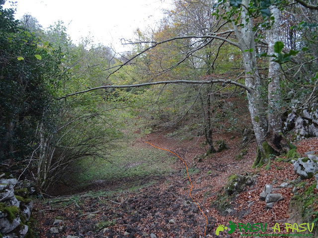Atravesando el bosque de la Xamoca
