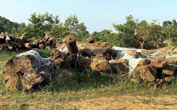 """Vụ án phá rừng khủng ở Lâm Đồng: Gần 200 ha rừng """"bốc hơi"""" như thế nào?"""