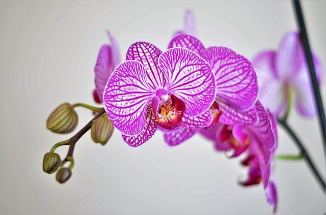 hoa lan hồ điệp đẹp 3