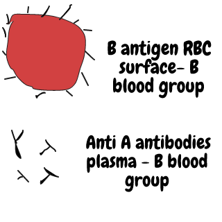 B blood group antigen aur antibodies