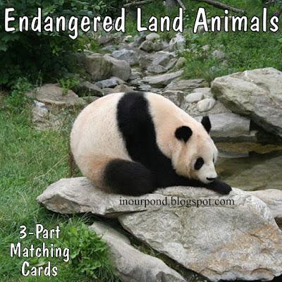 FREE 3-Part Cards for Safari Ltd Endangered Land Animals Toob