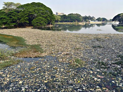 Failing to Protect Bengaluru Lakes from Contamination