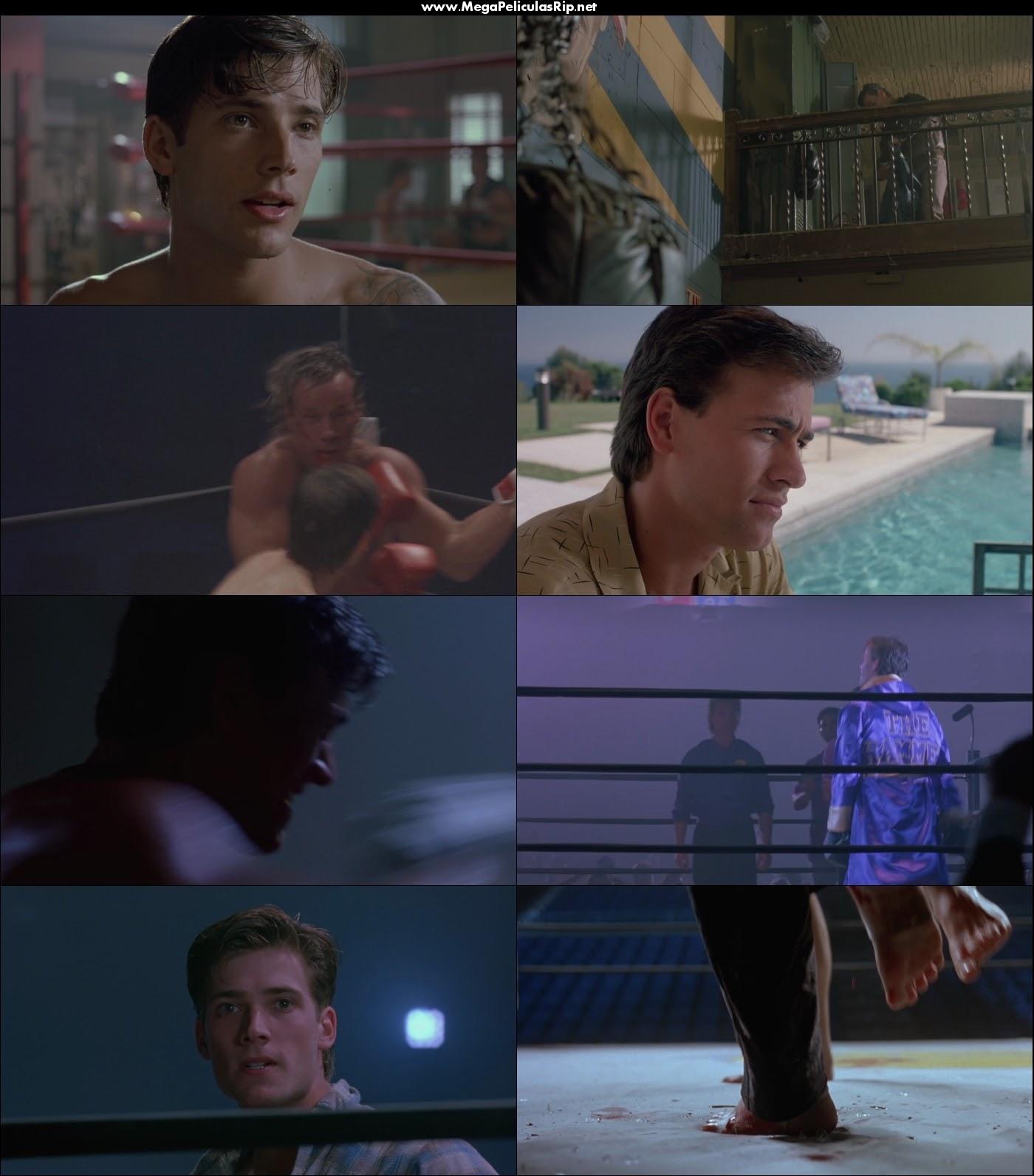 Kickboxer 2 1080p Latino