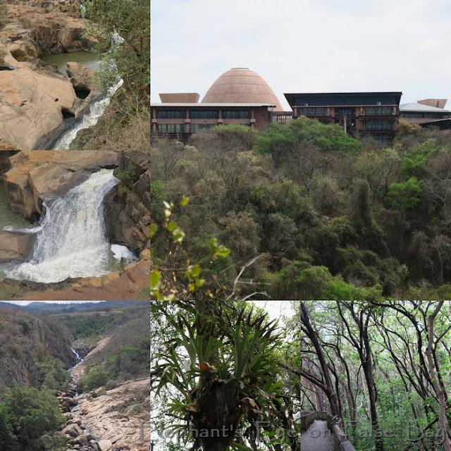Mpumalanga Provincial Legislature and Lowveld NBG African Rain Forest