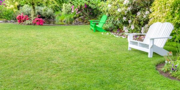 Tips Memilih Tanaman untuk Taman Rumah
