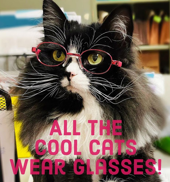 Truffles the optometrist's working cat