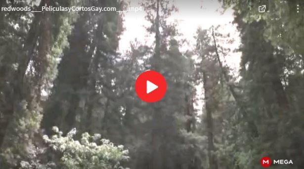CLIC PARA VER VIDEO Redwoods - Secoya - 2009 - Pelicula - sub español