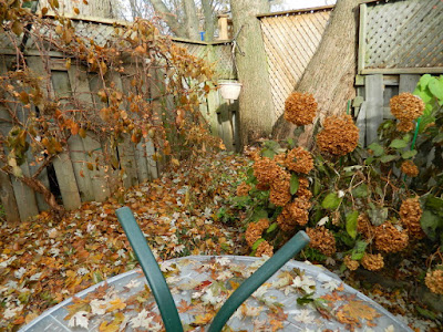 Greenwood-Coxwell Toronto Fall Garden Clean up before Pruning Annabelle Hydrangeas by Paul Jung Gardening Services