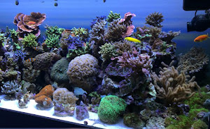 Reef Aquarium Chemistry Maintenance