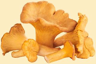 Mushroom farming business in India