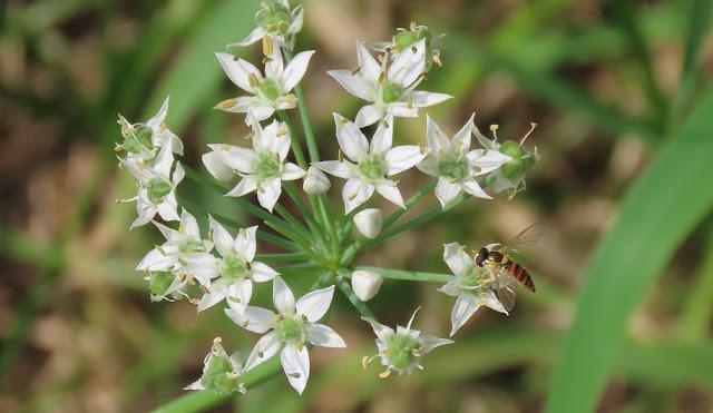 花の蜜を吸う蜂