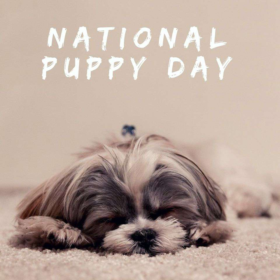 National Puppy Day Wishes Awesome Picture